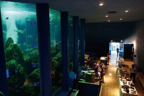 A dinner party in front of a large aquarium